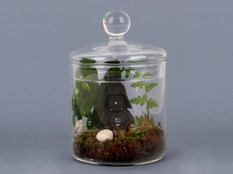 DIY terrarium Star Wars